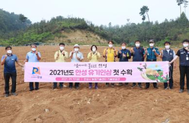 김보라 안성시장, 유기인삼 수확현장 방문 농업인 격려